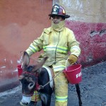 fireman with donkey
