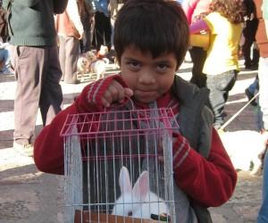 st anthony bunny
