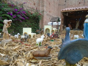nativity perspective