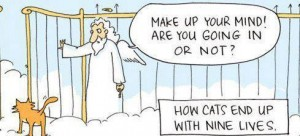How-Cats-End-Up-With-Nine-Lives